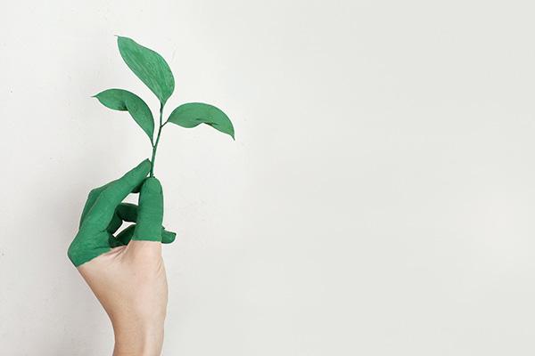 Cara sostenibilità