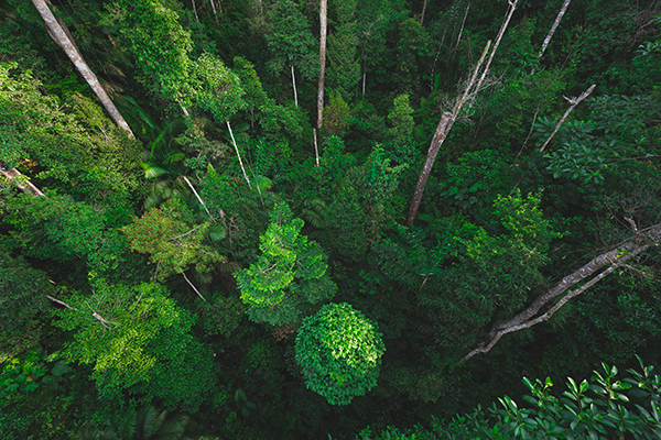 Earth Day, riscoprire il significato della parola 'ambiente'